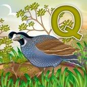 quail_02_by_rheasan-d5vx9dx
