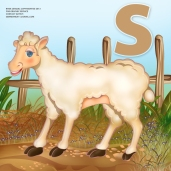 sheep 05