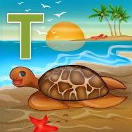turtle copy