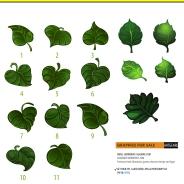 04 leaf